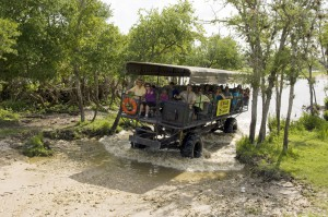 swamp_buggy_tour_01