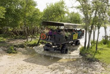 swamp_buggy_tour_01
