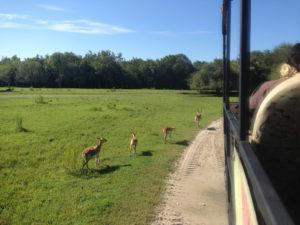 Wildlife in the Florida Everglades