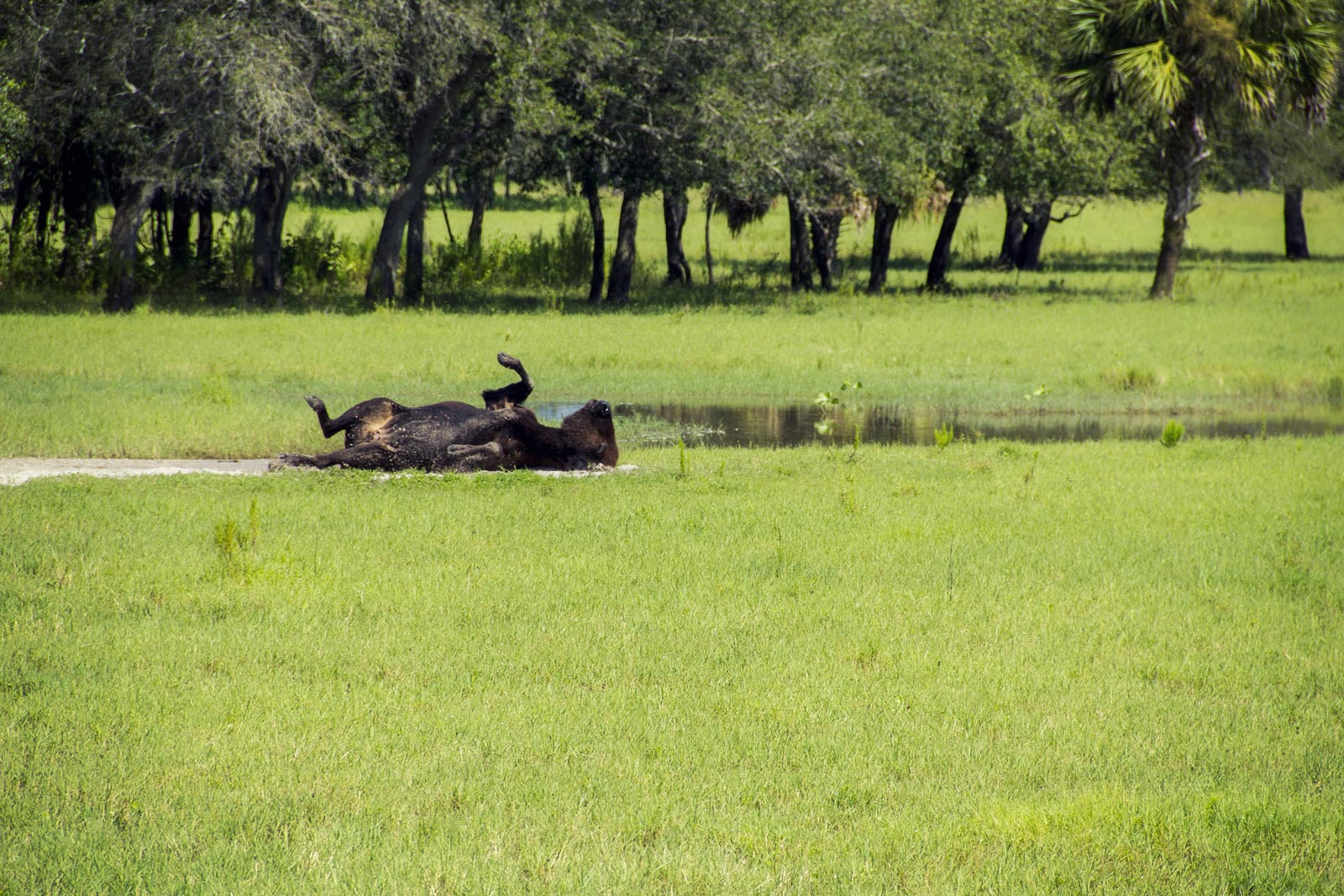 Wildlife to See in the Florida Everglades