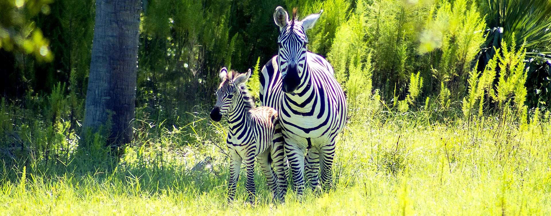 Everglades Wildlife Park